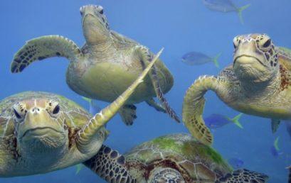 Khảo sát về vấn đề bảo tồn rùa biển